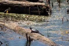 swamp-5799